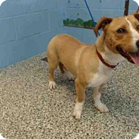 Adopt A Pet :: A492677 - San Bernardino, CA