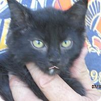 Adopt A Pet :: Pepper - Germantown, MD