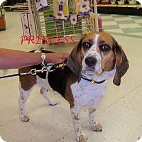 Adopt A Pet :: PRINCESS - Ventnor City, NJ