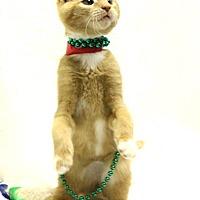 Adopt A Pet :: Denali - Murfreesboro, NC