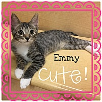Adopt A Pet :: Emmy - Foothill Ranch, CA