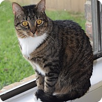 Adopt A Pet :: Gilly (declawed) - Houston, TX