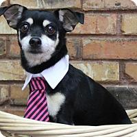 Adopt A Pet :: Peanuts - Benbrook, TX