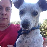Adopt A Pet :: Spotz - Oakdale, LA