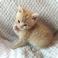 Adopt A Pet :: Asland - Mackinaw, IL