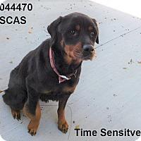 Rottweiler Mix Dog for adoption in Lake Panasoffkee, Florida - Diva