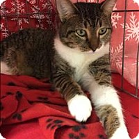 Adopt A Pet :: Archie - Sherwood, OR