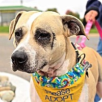 Adopt A Pet :: Queen Anne - Bruce Township, MI