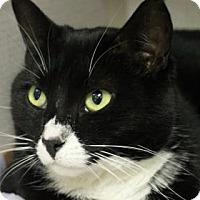 Adopt A Pet :: Rosie - E. Brookfield, MA