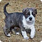 Adopt A Pet :: DELTA