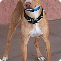 Adopt A Pet :: Randal - Palmdale, CA