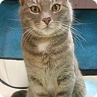 Adopt A Pet :: Janet - Reston, VA
