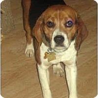 Adopt A Pet :: Jarrett - Novi, MI