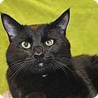 Adopt A Pet :: Brody - Foothill Ranch, CA