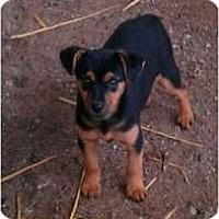 Adopt A Pet :: Rosey Posey - Glastonbury, CT