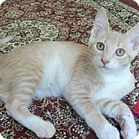 Adopt A Pet :: Connor - Reston, VA