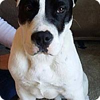Adopt A Pet :: Blaze - Sneads Ferry, NC