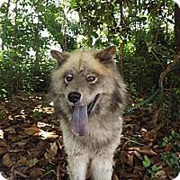Adopt A Pet :: Webster - Tucker, GA