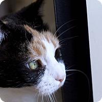 Adopt A Pet :: Gertrude Ederle - Chicago, IL