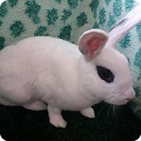 Adopt A Pet :: Paisley - Garland, TX