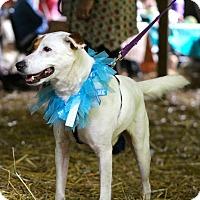 Adopt A Pet :: Ace - Huntsville, TN