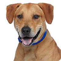 Adopt A Pet :: Diesel - Los Angeles, CA