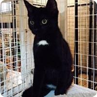 Adopt A Pet :: Tux - McHenry, IL