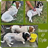 Adopt A Pet :: Bonnie - Columbia, SC