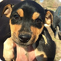 Adopt A Pet :: Charm AD 01-16-16 - Preston, CT