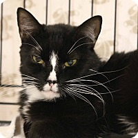 Adopt A Pet :: Queenie - Gainesville, VA