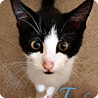 Adopt A Pet :: Tambo - Roanoke, VA