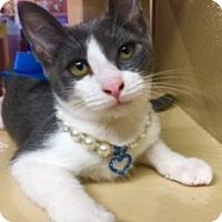 Adopt A Pet :: Paisley - Houston, TX