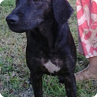 Adopt A Pet :: Mable - Palm Harbor, FL