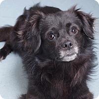 Adopt A Pet :: Tweed - Sudbury, MA