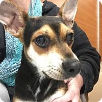 Adopt A Pet :: Greta - Gloucester, MA