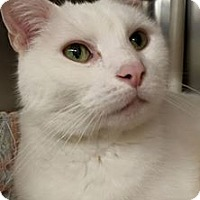 Adopt A Pet :: Pookie - Maryville, MO