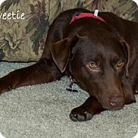 Adopt A Pet :: Sweetie - Clovis, CA