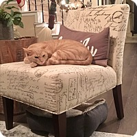 Adopt A Pet :: Wesley - Keller, TX