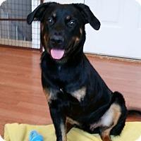 Adopt A Pet :: Apollo - New Oxford, PA