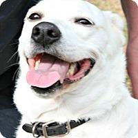 Adopt A Pet :: Tesla - Richland Hills, TX