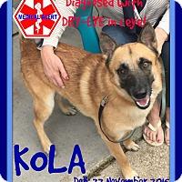 Adopt A Pet :: KOLA - Jersey City, NJ