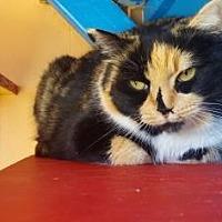 Adopt A Pet :: Chloe - Dahlonega, GA