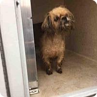 Adopt A Pet :: PEBBLES - Louisville, KY