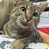 Adopt A Pet :: Haley - Reeds Spring, MO