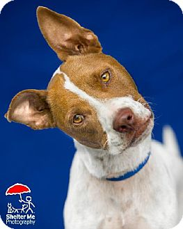 Terrier (Unknown Type, Medium) Mix Dog for adoption in New Orleans, Louisiana - Henry