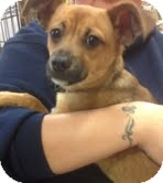 German Shepherd Dog Mix Puppy for adoption in Modesto, California - Jay Jay