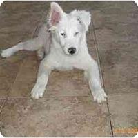 Adopt A Pet :: Marlee - Mesa, AZ