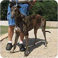 Adopt A Pet :: Moon PIe - Oak Ridge, NC