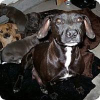 Adopt A Pet :: Kaeli - Sacramento, CA