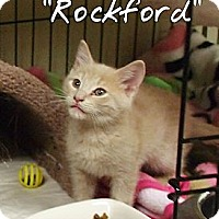 Adopt A Pet :: Rockford - Ocean City, NJ